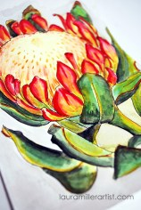 1protea flower sketch watercolor