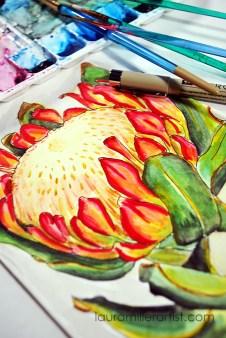 3protea flower sketch watercolor