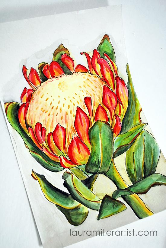 7protea flower sketch watercolor