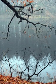 9misty morning reflections on the lake