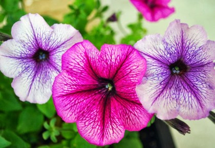 michigan-wildflowers-laura-miller-artist-livividli3