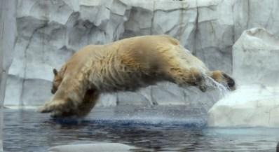 winter-embrace-detroit-zoo-polar-bear-laura-miller-artist-livividli10-3