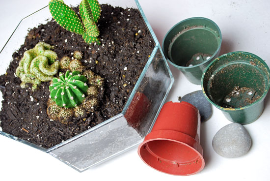 9tribal cactus mini garden