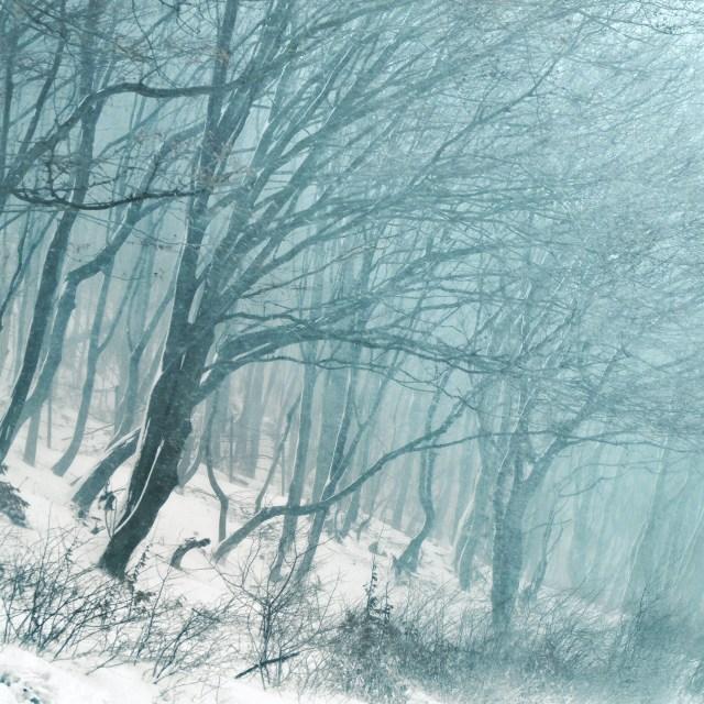 trees-976974_1920