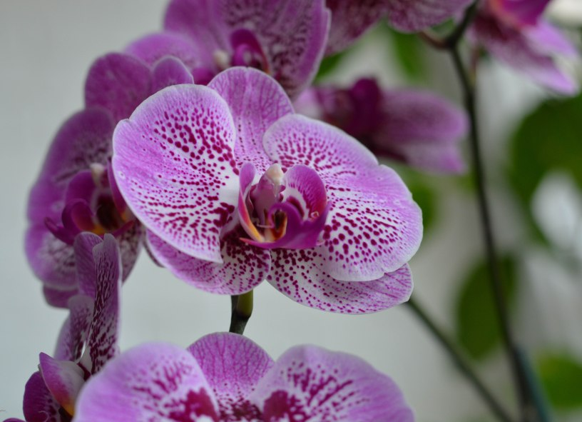 My orchid last summer