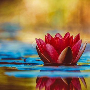 Bénéfices de la thérapie du son - énergéticienne, massage énergétique, travail par la voix, sons d'harmonisation, astrologie, méditation