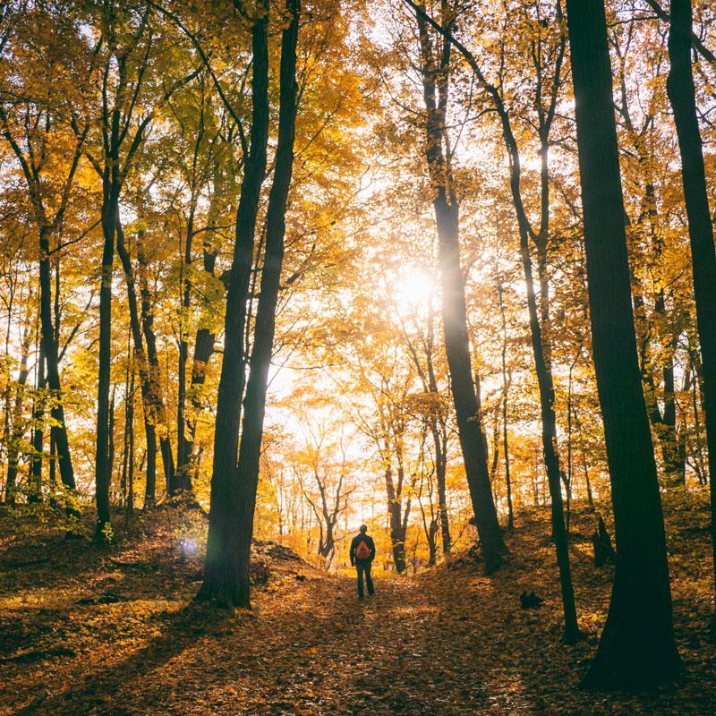 La santé par les arbres
