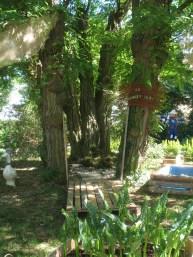 Jardin Fort 2013 (3)