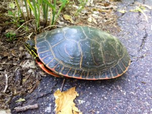 Turtle [15 words or less]