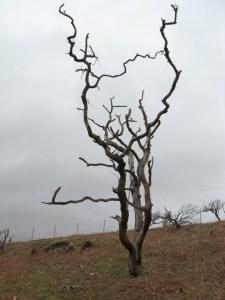 Scotland tree