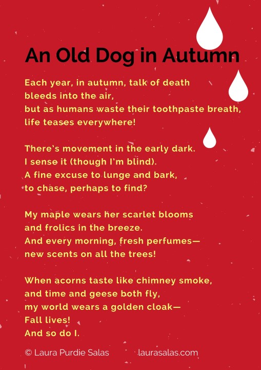 An Old Dog in Autumn