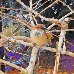 Bird on a Branch [15 Words or Less]