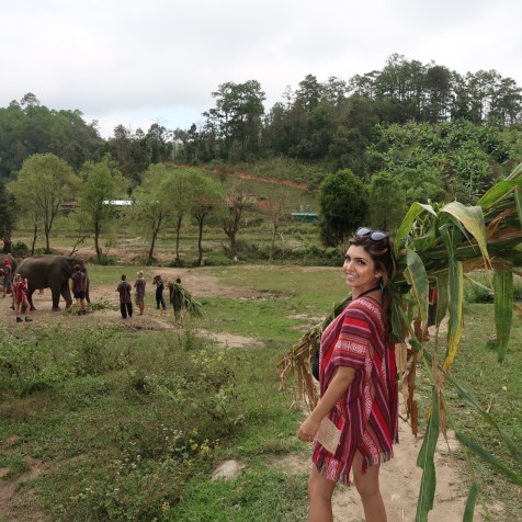 elephantjungle2