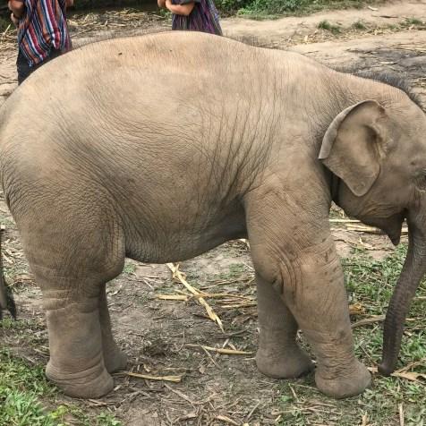 elephantjungle7