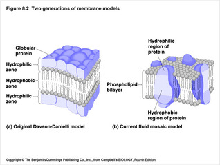 diagram of fluid mosaic model cell membrane top hat trailer wiring the plasma biology and chemistry blog it is cells outer made up two layers phospholipids have proteins embedded separates