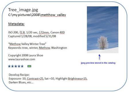 An Image Catalog Entry
