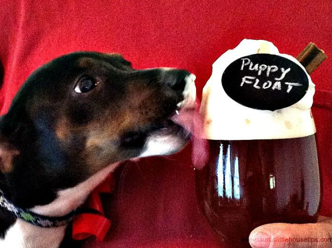Homemade Puppy Float w/Pedigree Dentastix® #ShareFunshine #Ad 7