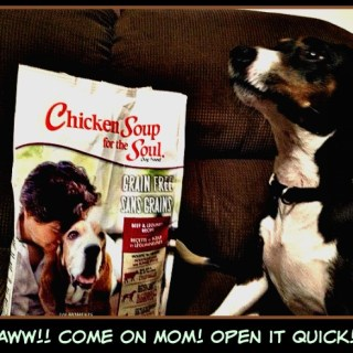 Pet Love with Chicken Soup for the Soul Pet Food  #LoveYourPetEveryDay