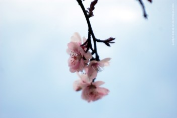 Drop of pink