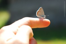 the butterfly friend who told me a secret