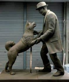 Hachiko and Ueno, reunited at last