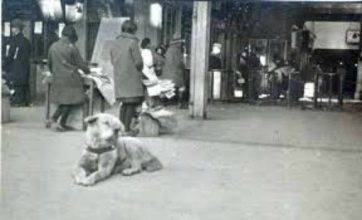 Hachiko lying and watching at station