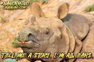 Curious rhino. Tell me a story, I'm all ears.