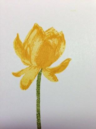 Yellow-Lotus