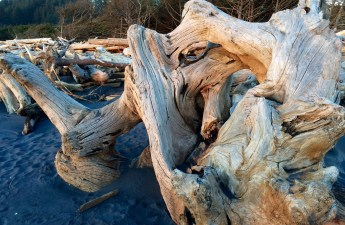 Driftwood on the beach at Cape Disappointment State Park