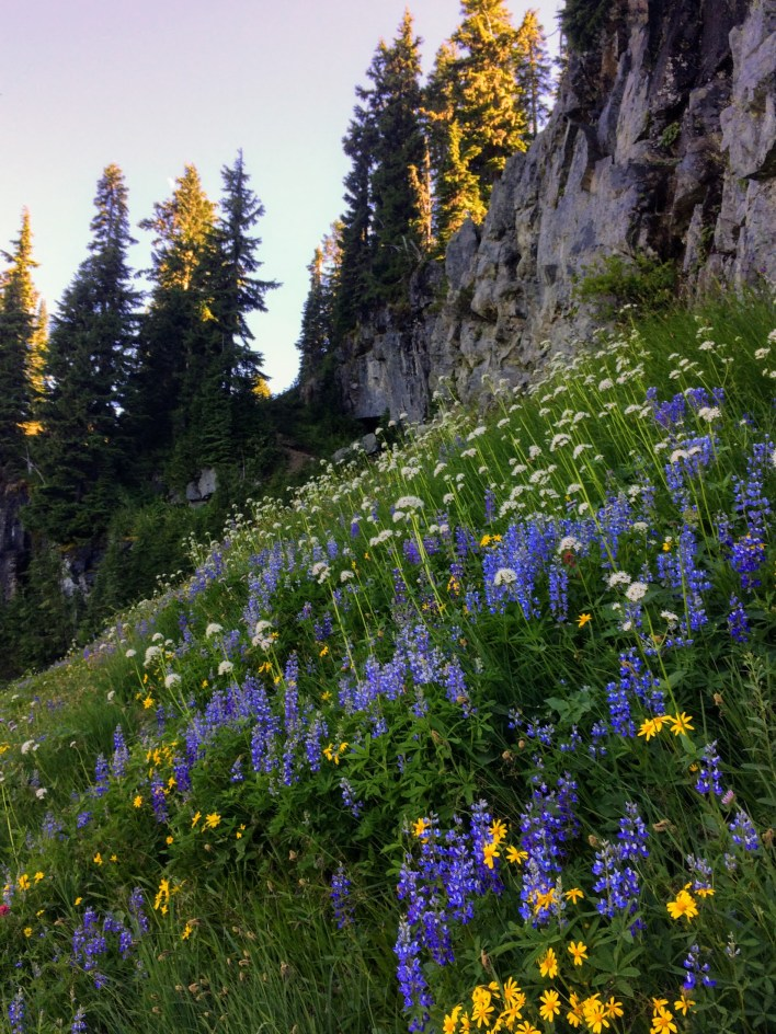 Flowers carpet the slopes below the summit of Naches Peak