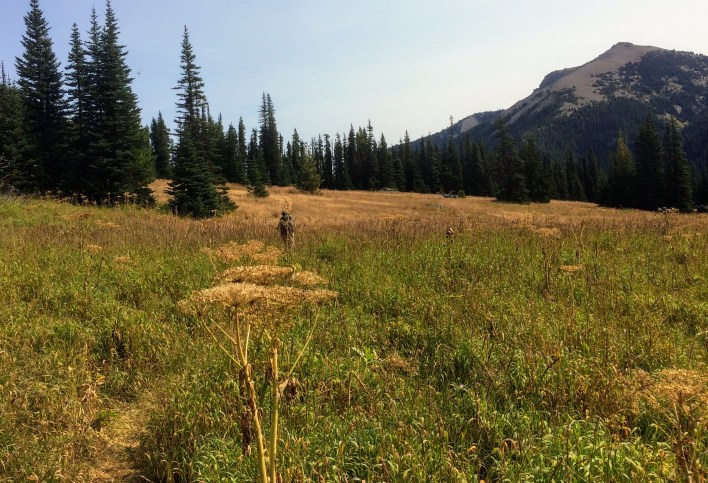 Broad meadows and subalpine fir stands in lower Badger Valley.
