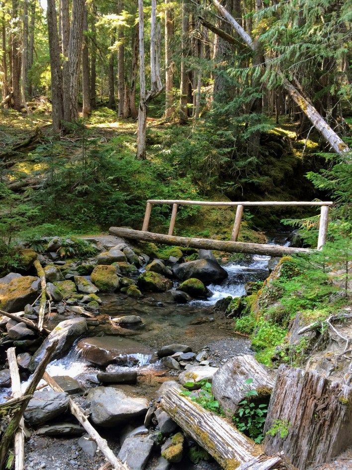 Stream in the forest.