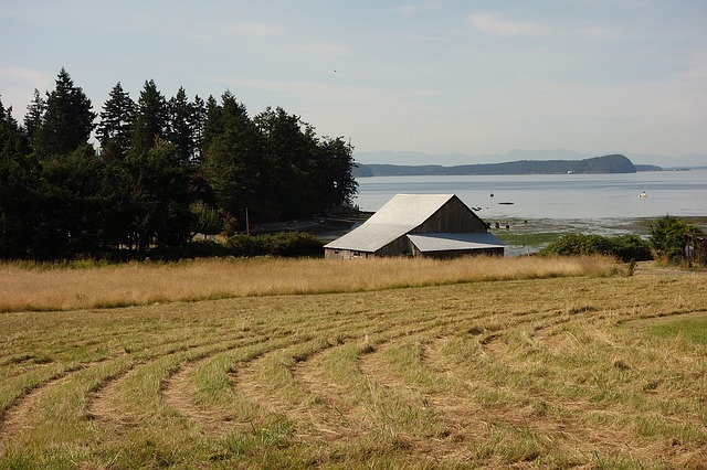 a field of cut hay with a barn in the background