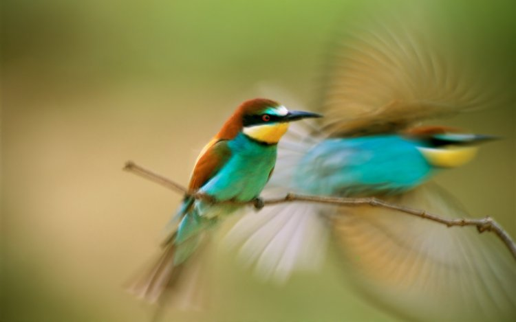 A colorful bird is shown in motion, flapping its wings and flying away.