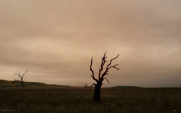 A lifeless tree sits in the Serengeti with a dull, polluted sky