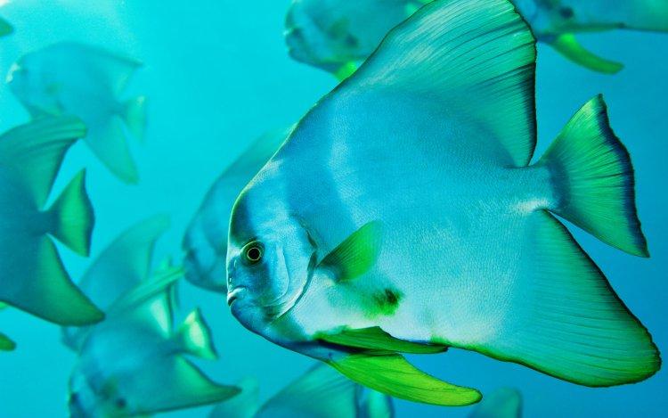 A school of tropical fish swim in a crystal clear ocean.