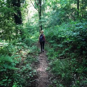 Woodland hikes