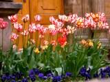 Flowers outside Prague Castle