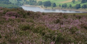 The moors near Wuthering Heights
