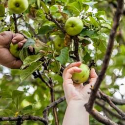 Les Fruits Partagés, texte de Rimouski en transition