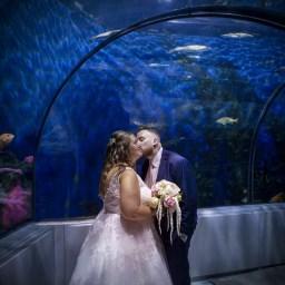 Mariage à l'Aquarium de Québec