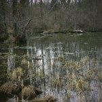 Swamp Photo