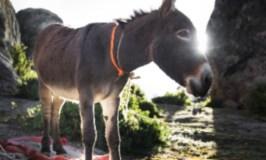 gift, one donkey