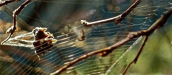 gratitude for spider webs