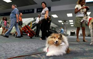sfl-travelers-dogs-airport-20130823-004