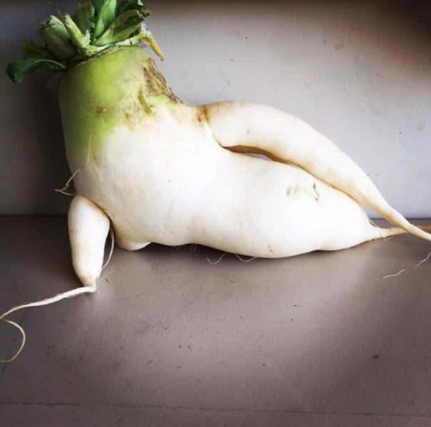 white radish like a Modigliani odalisque lying on her side