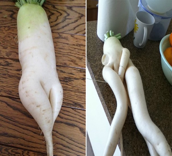 """two radishes like people on their backs, one with invitingly crossed """"legs"""" and the other with a third tendril rising out of its """"crotch."""""""