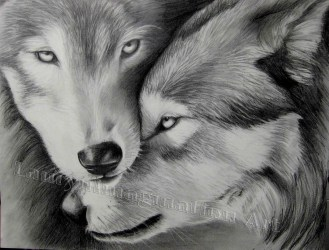 wolves drawing drawings graphite advanced dog project studies