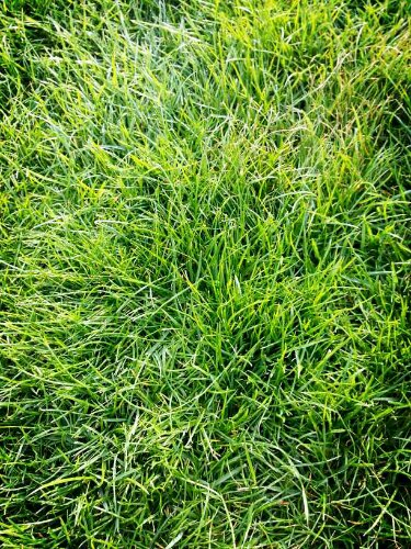 Soft grass in Green Park