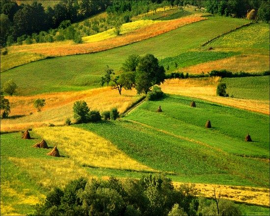 green landscape photography